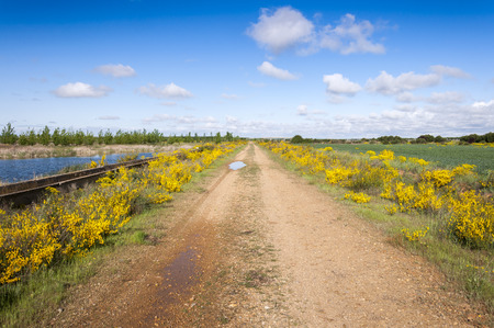 Flowering dirt road in an agricultural landscape in the plain of the River Esla, in Leon Province, Spain