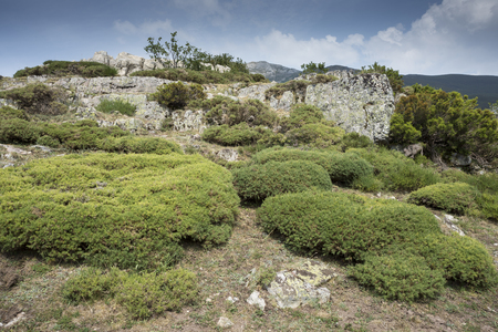 Alpine padded brushwood of Genista hispanica in Saliencia Valley, Somiedo Nature Reserve. It is located in the central area of the Cantabrian Mountains in the Principality of Asturias in northern Spain Stock Photo