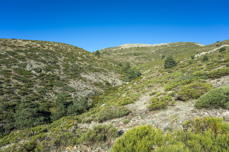 Padded brushwood (Cytisus oromediterraneus and Juniperus communis) and Scots pine forest (Pinus sylvestris) near Hornillo Stream, in Guadarrama Mountains National Park, Spain Stock Photo