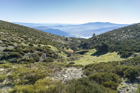 Padded brushwood (Cytisus oromediterraneus and Juniperus communis) near Hornillo Stream, in Guadarrama Mountains National Park, Spain