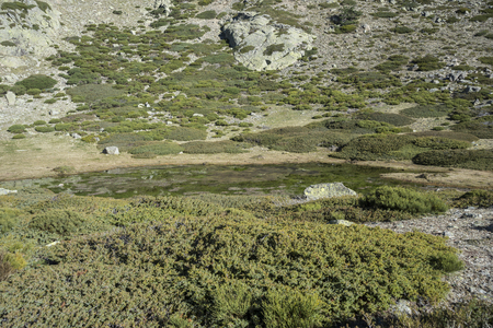 Glacial lagoon next to the Pico del Nevero (Snowfield Peak; 2.209 metres), in Guadarrama Mountains National Park, Spain. The vegetation consists of padded brushwood (Cytisus oromediterraneus and Juniperus communis).
