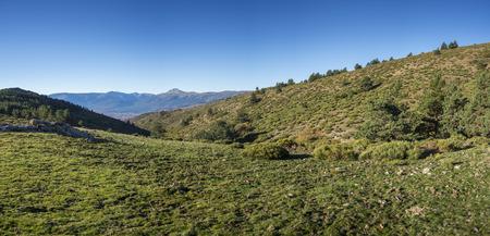 Meadows and padded brushwood (Cytisus oromediterraneus) near Hornillo Stream, in Guadarrama Mountains National Park, Spain