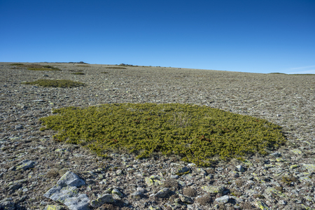 Alpine grasslands of Fescue (Festuca indigesta) and Padded brushwood (Juniperus communis) located between the Pico del Nevero (Snowfield Peak; 2.209 metres) and Navafria Mountain Pass (1.774 m), in Guadarrama Mountains National Park, Spain