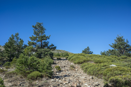 Alpine grasslands of Fescue (Festuca indigesta), padded brushwood (Cytisus oromediterraneus and Juniperus communis) and Scots Pine forest (Pinus sylvestris) located between the Pico del Nevero (Snowfield Peak; 2.209 metres) and Navafria Mountain Pass (1.774 m), in Guadarrama Mountains National Park, Spain Stock Photo