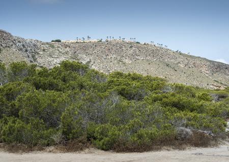 Pinède de pin d'Alep, Pinus halepensis, poussant sur les dunes. Photo prise à Santa Pola, Alicante, Espagne