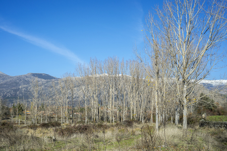 Poplar groves next to the Fuentiduena stream on its way through the city of Cerceda, in the province of Madrid, Spain. In the background it can be seen The Guadarrama Mountains