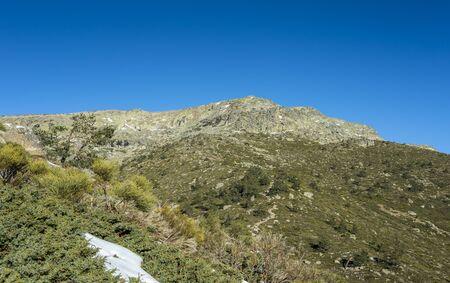Padded brushwood (Juniperus communis subsp. alpina and Cytisus oromediterraneus) in the municipality of Rascafria, in Guadarrama Mountains National Park, province of Madrid, Spain