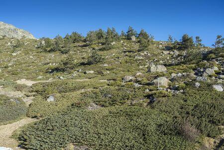 Padded brushwood (Juniperus communis subsp. alpina and Cytisus oromediterraneus) in the municipality of Rascafria, next to de Penalara Lagoon, in Guadarrama Mountains National Park, province of Madrid, Spain Stock Photo
