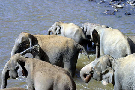 replenish: Elephants getting some refreshment in the water.