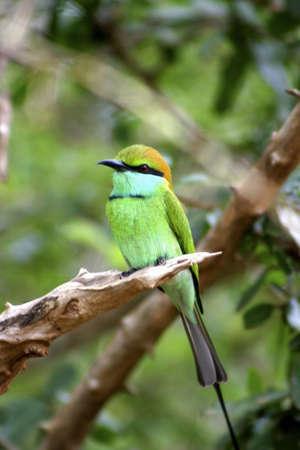 Green bird on a tree branch. Stock Photo - 3190859