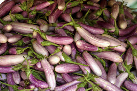 Plenty of eggplants. Stock Photo - 3190862
