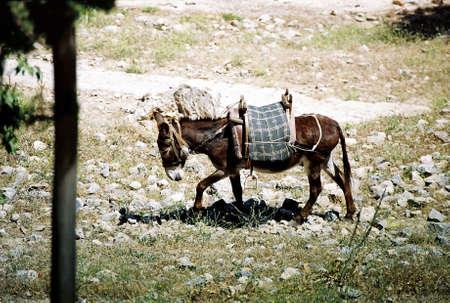 Donkey with a saddle on its back. Stock Photo - 3191006