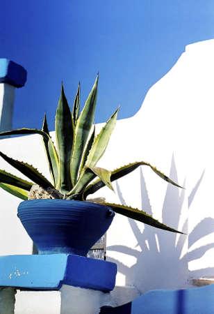 Plants on flower pot. LANG_EVOIMAGES