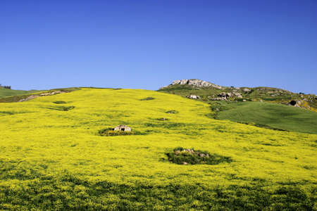 Meadow in Sicily, Southern Italy.
