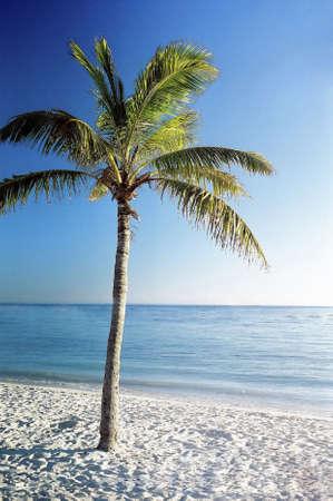 across america: Tropical island.