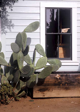 Cactus outside a house. Stock Photo - 3191123