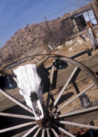 Steer skull hanging on a wheel. Stock Photo - 3191133