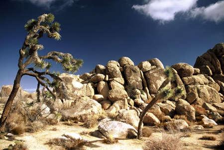 Desert. LANG_EVOIMAGES
