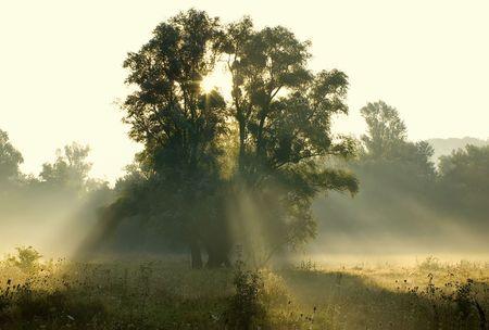 Fog at dawn