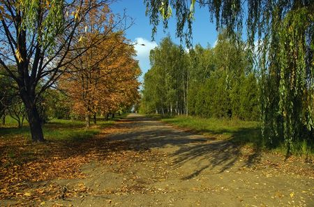 An autumn is in a park