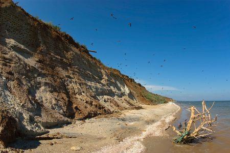 Wild seashore
