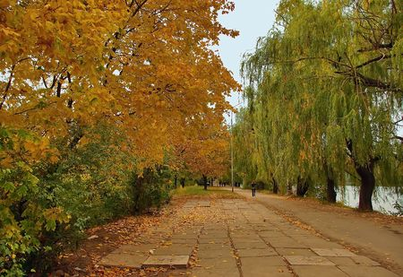 An autumn is in a park. Stock Photo