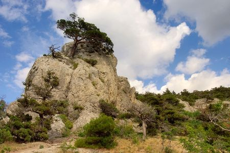 Pines on the rocks. Stock Photo