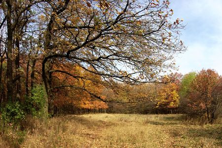 Autumn sketch Stock Photo