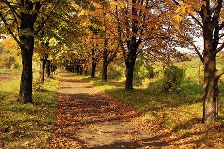 Chestnut avenue autumn
