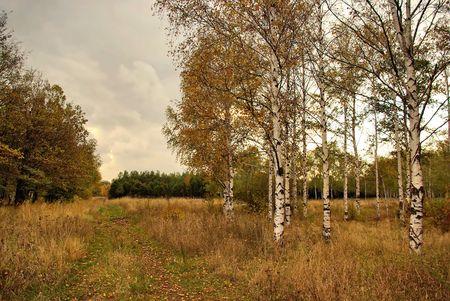 Overcast autumn day Stock Photo