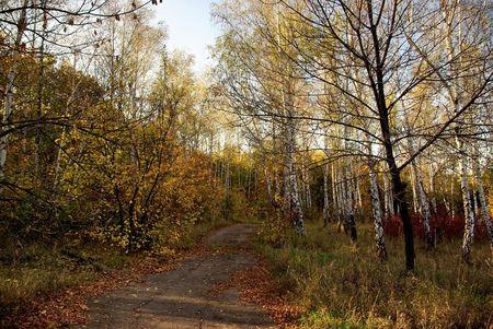 In the autumn park closer to the su