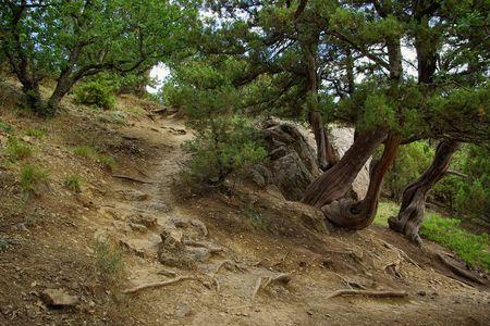 In the juniper grove Stock Photo