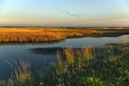 Morning flight over the marsh ... Stock Photo