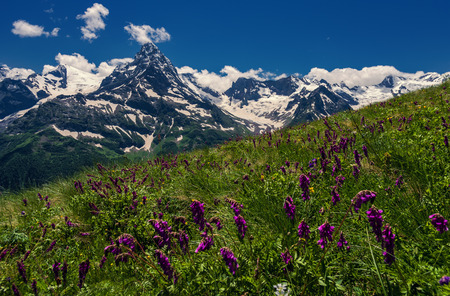 Mountains and flowers Caucasus Stock Photo