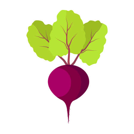 Beet with green leaves on white background. Red beet root. Illustration
