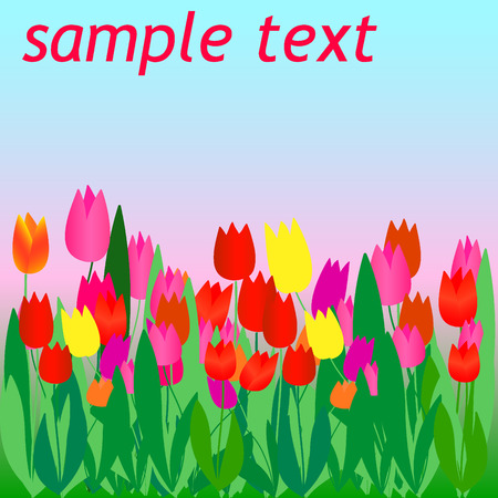 Flyer with color vector tulips Vector