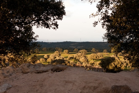 Holm oak on plowed field Stock Photo