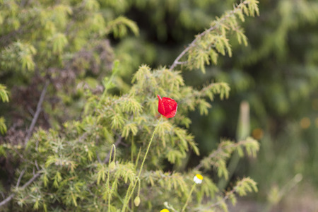 haulm: Background blur plants in spring with deep