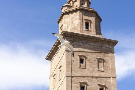 galicia: Seagull flying in Hercules tower , La Coruna, Galicia, Spain