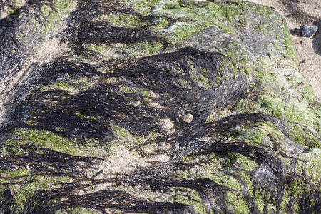 green algae: Green algae on rock forming a pattern
