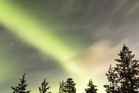 northern lights, aurora borealis over trees