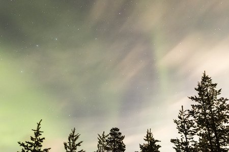kiruna: northern lights, aurora borealis over trees