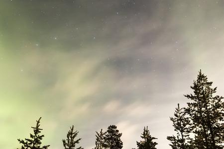 aurora: northern lights, aurora borealis over trees