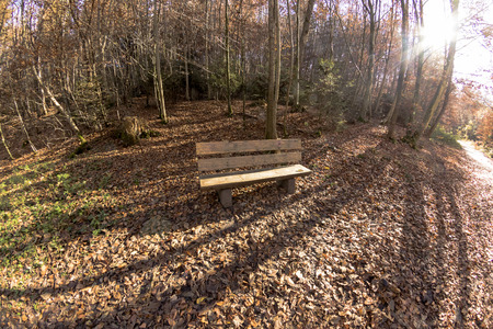 lush: Nice wooden bench in lush autumn forest