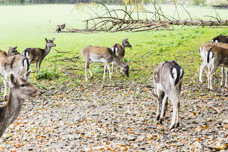 Herd of deers in the forest in Autumn Stock Photo