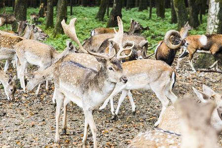 herd of deer in the forest in Autumn