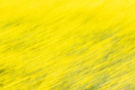 An abstract Rapeseed field with blue sky