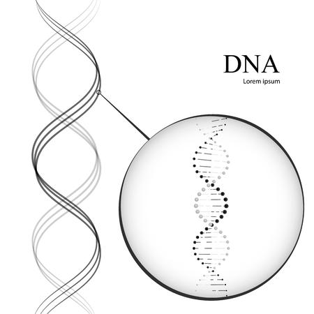 DNA 分子。白い背景で隔離のベクトル図