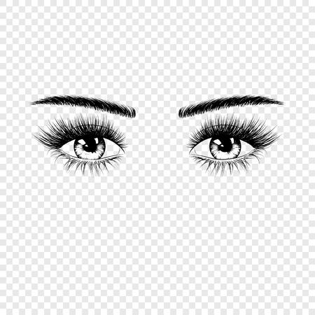 Silueta de ojos femeninos con pestañas y cejas. Ilustración de vector aislado sobre fondo transparente
