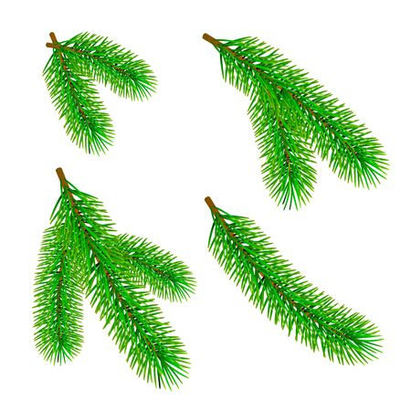 Green fir branch isolated on white background. Traditional Christmas evergreen tree decoration element. Vector  イラスト・ベクター素材